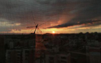 osłona okna przeciw komarom